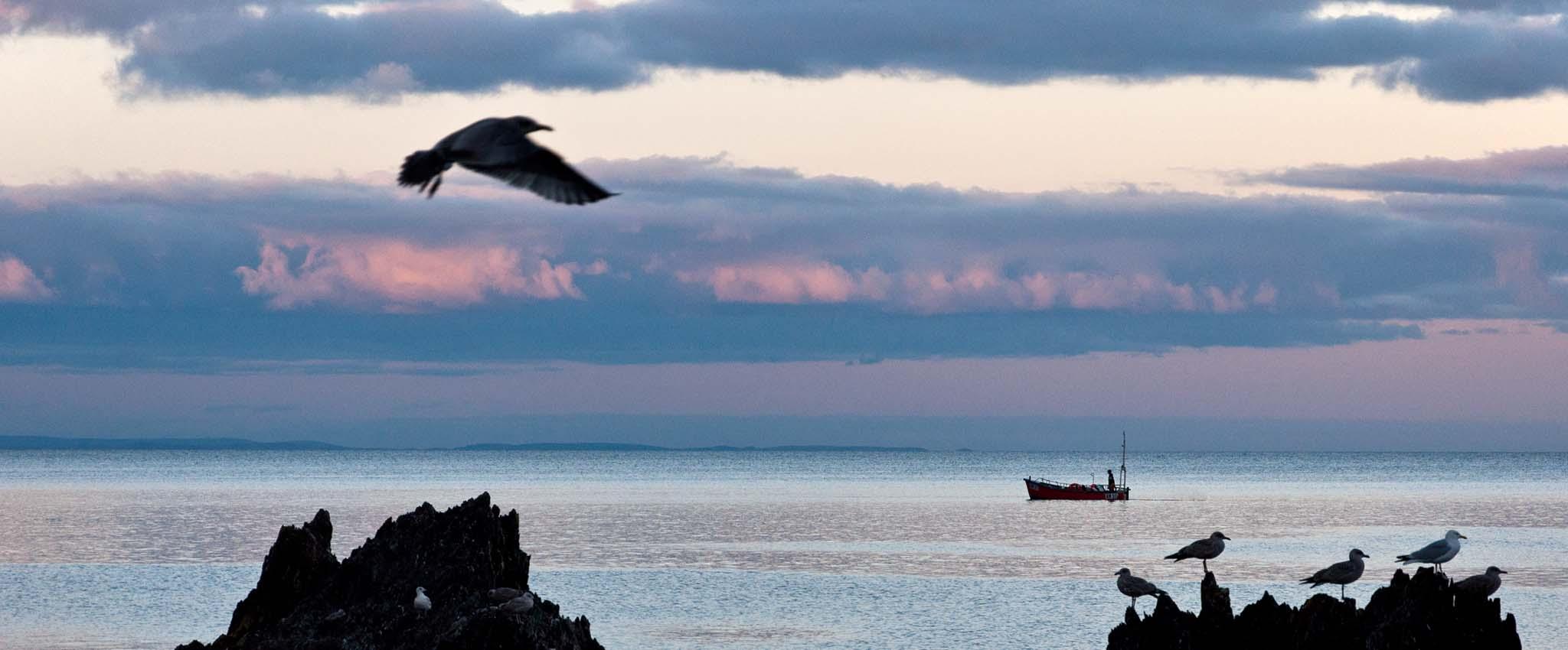 Mevagissey Gulls