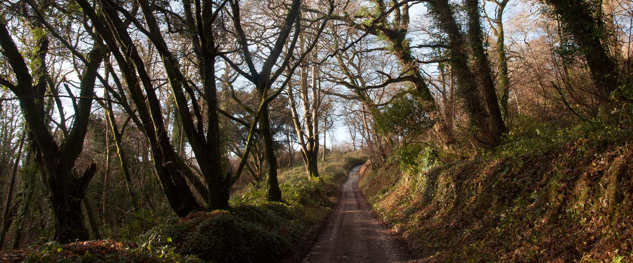 Path to Heligan